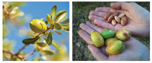 semente de argan Moroccanoil Máscara Hidratante e Glimmer Shine Spray