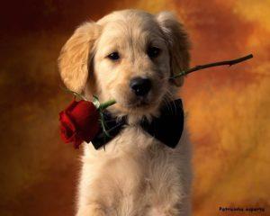 Wallpaper Cachorros papel de parede 5 300x240 - Cachorro é tudo de bom!!!