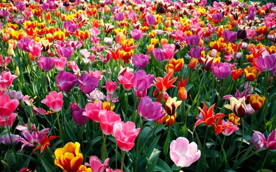 127409 Papel de Parede Primavera 127409 1440x900 - Especial primavera: looks e maquiagens para você arrasar