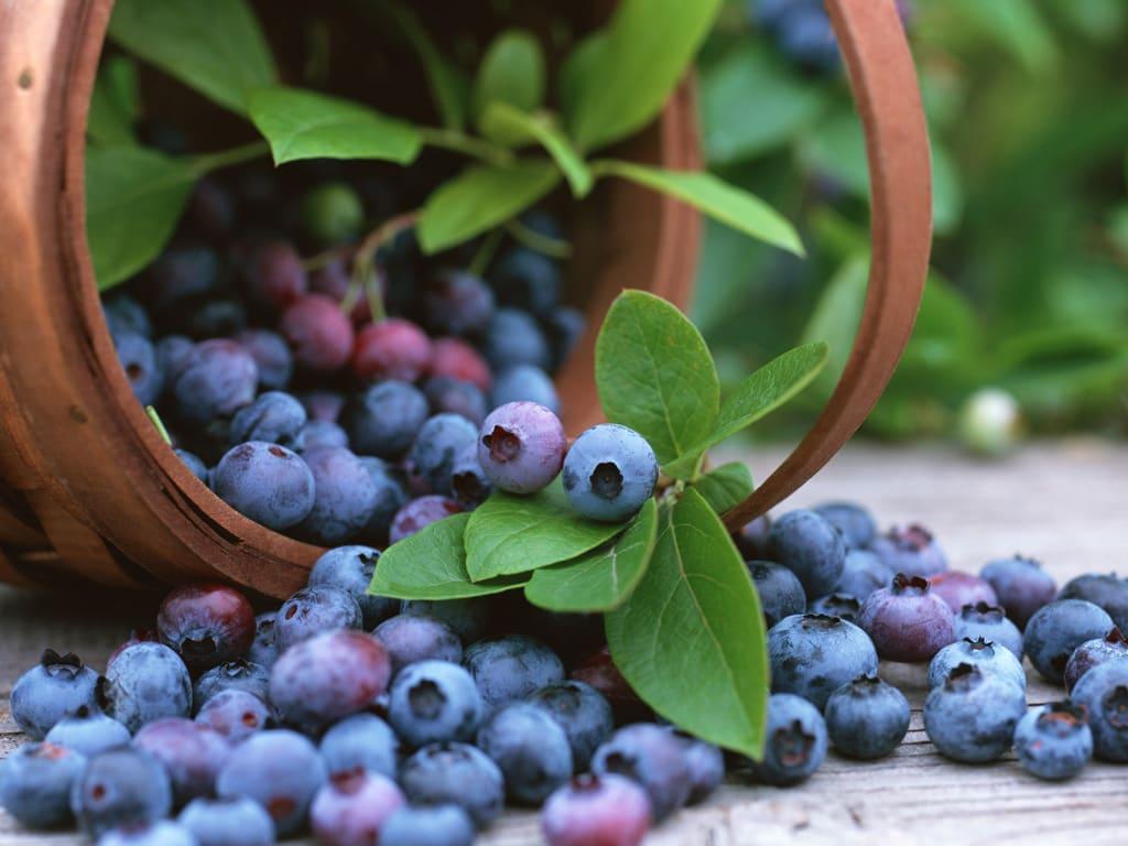 13 Razões pra Consumir Blueberry