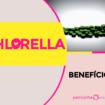 Chlorella 105x105 - Chlorella - Benefícios e Propriedades