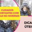 Cuidados Importantes Com A Pele No Inverno 105x105 - Como Cuidar Da Pele No Inverno?